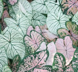scihe wiederholende Blätter bilden ein Muster